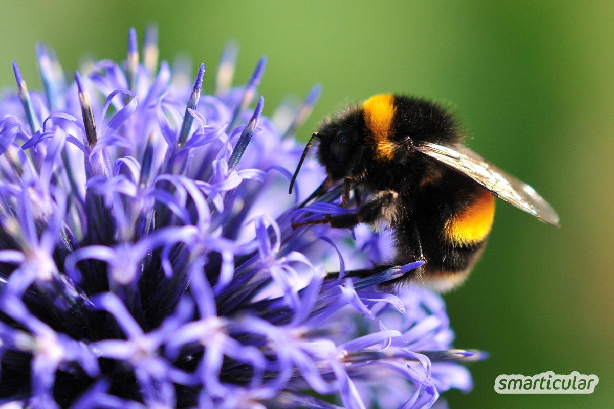 Ein insektenfreundlicher Garten versorgt Bienen, Hummeln und Co. mit Wasser, Nahrung und Nistmöglichkeiten. So verwandelst du den Garten in ein Insektenparadies.