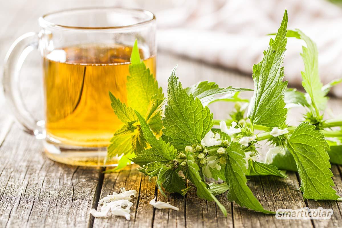Die Taubnessel ist eine unterschätzte und äußerst gesunde Heilpflanze, die vielfältig in der Küche und für die Gesundheit Anwendung findet. Die besten Rezepte findest du hier.