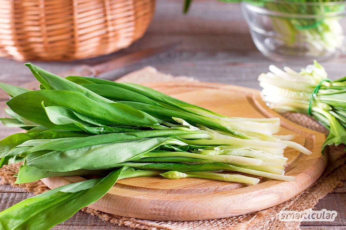 Der gesunde Bärlauch lässt sich in Form von selbst gemachten grünen Bärlauch-Nudeln für das ganze Jahr konservieren.