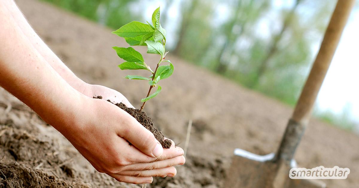 Bäume pflanzen fürs Klima: Hier erfährst du, welche Möglichkeiten es gibt, Bäume zu pflanzen, zu spenden oder in nachhaltige Forstwirtschaft zu investieren.
