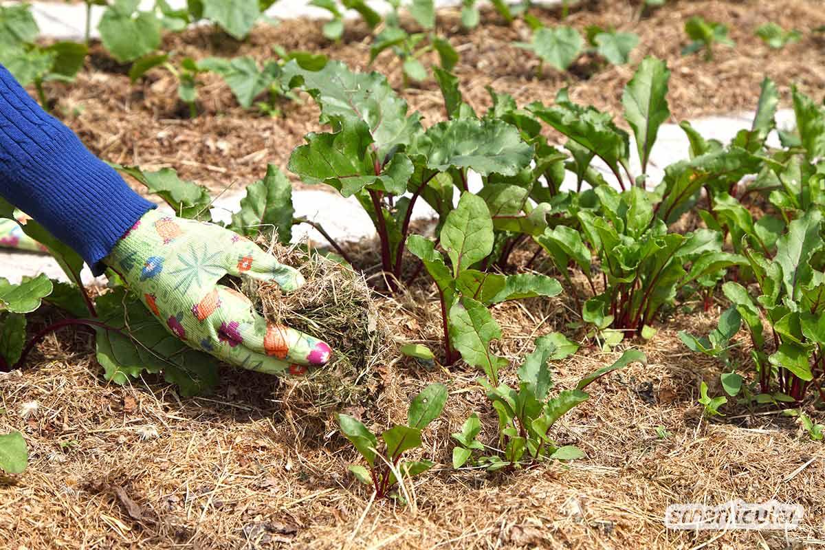 Ein Naturgarten macht weniger Arbeit und wirkt sich positiv auf die Umwelt und den Ertrag aus. So einfach lässt sich mit weniger Aufwand mehr erreichen.
