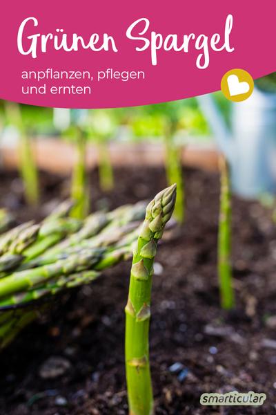 Grünen Spargel anzubauen, ist auch im eigenen Garten ganz einfach möglich - Erdwälle und Folien wie beim Anbau von weißem Spargel sind dafür nicht notwendig.