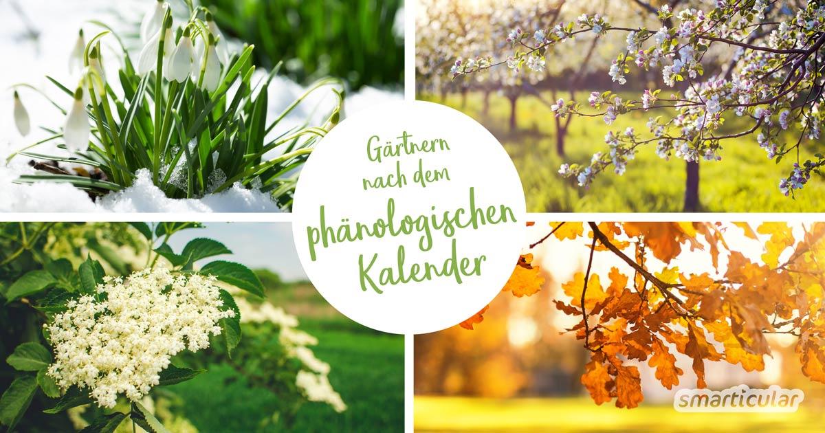 Mit dem phänologischen Kalender kannst du anhand von Zeigerpflanzen genau erkennen, wann es Zeit ist zum Säen, Pflanzen und Ernten.