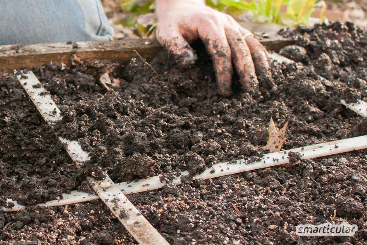 Einfaches und platzsparendes Square Foot Gardening ermöglicht auch Anfängern eine reiche Ernte, selbst wenn nur wenig Fläche oder gar kein eigener Garten vorhanden ist.