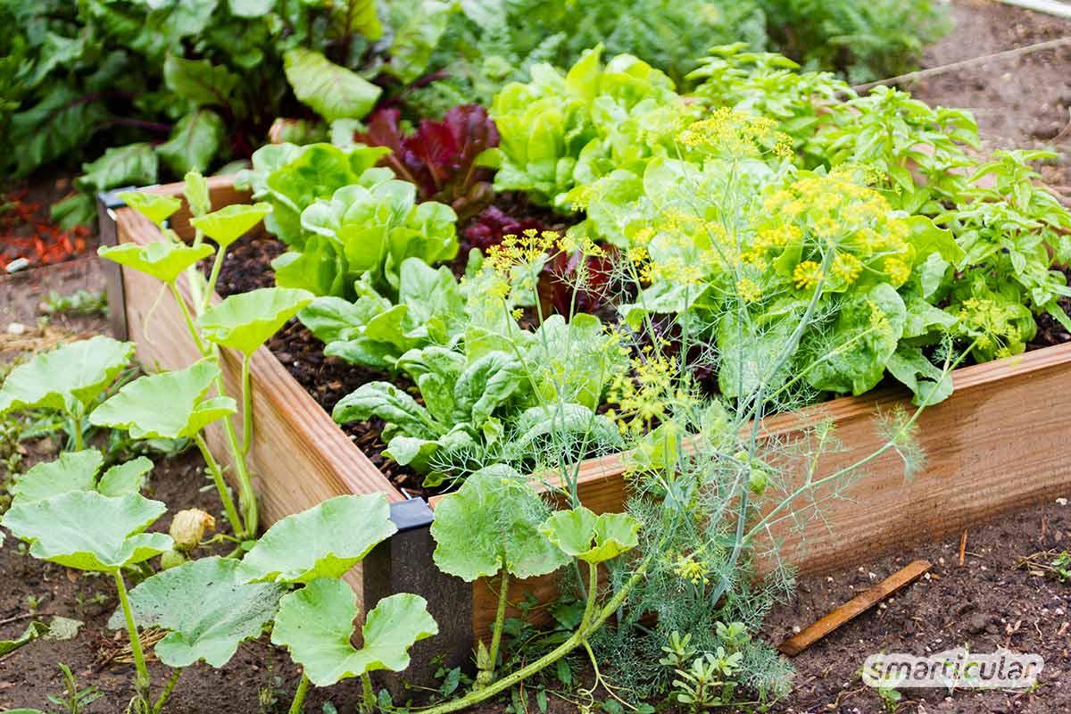 Mit diesen Tipps kannst du einen kleinen Garten so gestalten, dass eine reiche Gemüseernte möglich ist und viele Blumen blühen.