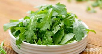 Rucola ist ein vielseitiges Küchenkraut, das auch auf dem Balkon oder Fensterbrett gedeiht. Hier findest du Anbau- und Erntetipps sowie abwechslungsreiche Rezepte.