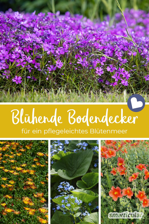 Blühende Bodendecker schmücken den Garten, schützen den Boden und reduzieren den Arbeitsaufwand, um Beikräuter in Schach zu halten