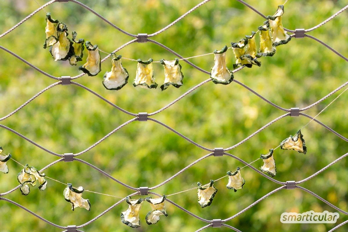 Gurkenchips sind eine originelle Idee, um die sommerliche Gurkenschwemme aus dem Garten zu verarbeiten - bei Sonnenschein sogar ganz ohne Stromverbrauch.