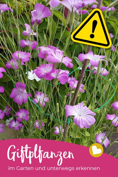 Achtung! Giftige Pflanzen im Garten können zur Gefahrenquelle werden – vor allem, wenn Kinder im Spiel sind. Hier findest du 15 gängige Giftpflanzen.