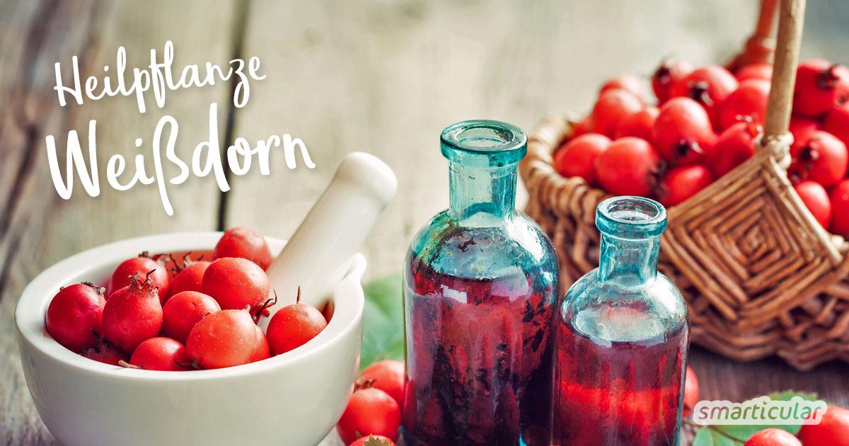 Der Weißdorn ist mit seiner herzstärkenden Wirkung eine kraftvolle Heilpflanze. Die besten Rezepte für deine Gesundheit und die Küche findest du hier.