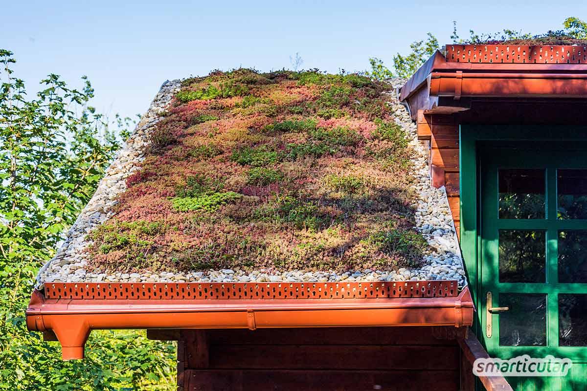 Eine Dachbegrünung verwandelt Beton in grüne Oasen und nutzt Mensch und Umwelt gleichermaßen. Hier erfährst du, wie du deine Dachbegrünung selber machen kannst.