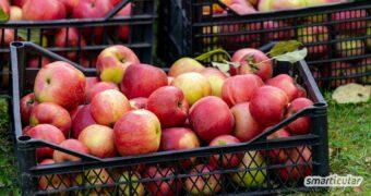 Bis zu einem Jahr lassen sich Äpfel lagern - vorausgesetzt, du findest den richtigen Ort in Wohnung oder Haus und kennst die richtigen Lagerbedingungen.
